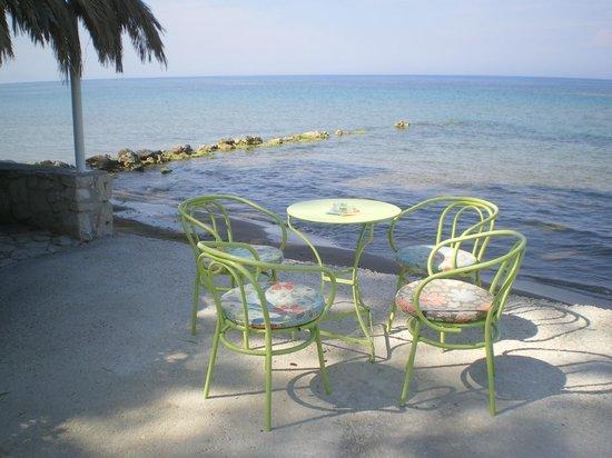 Mimoza Beach Bar : paradise