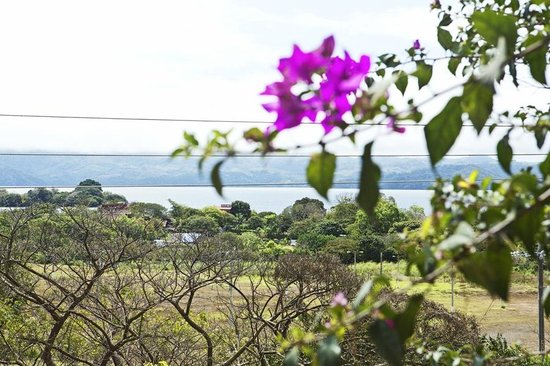 Posada Bugambilias: View from terrace
