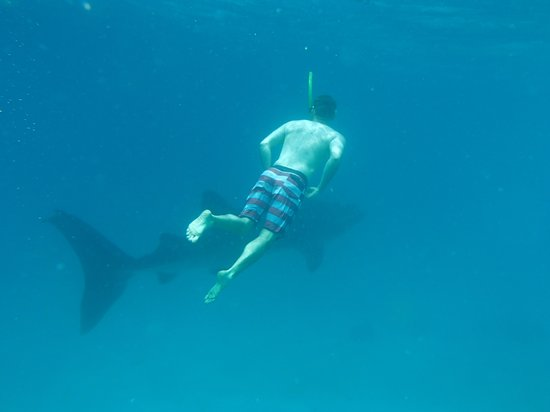 Eden Resort: swimming with the whale sharks