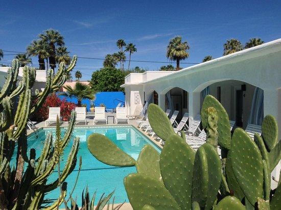 POSH Palm Springs Inn: Pool area