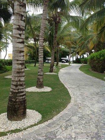 Tortuga Bay Hotel Puntacana Resort & Club : Pathway Network and vegetation