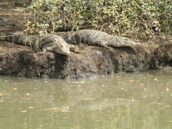 Reserve De Bandia: coccodrilli