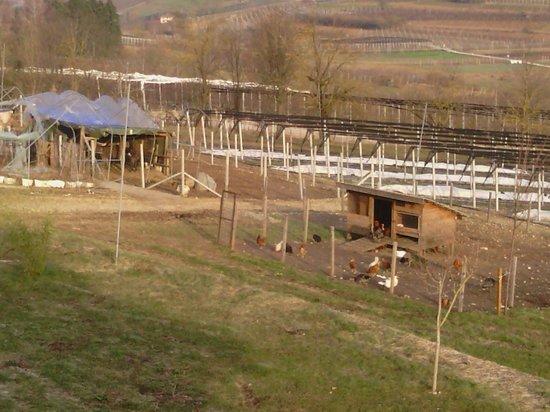 Agriturismo La Val: animali domestici