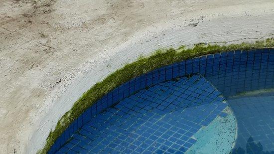 Hotel Las Brisas del Mar : una capa verde en la picina