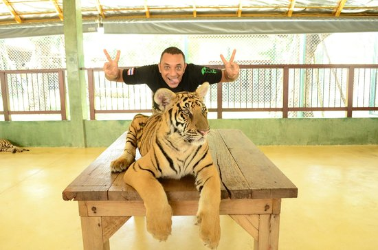 Tiger Kingdom : Me and the tiger