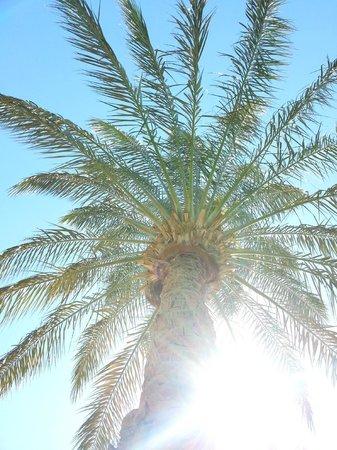 SENTIDO Palm Royale Soma Bay: Einfach nur schön
