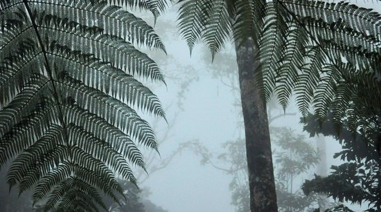 Rio Celeste Hideaway Hotel : First light and the misty, rain is sublime