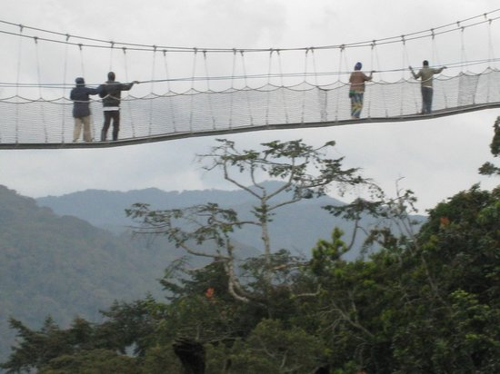 Nyungwe National Park : canopy walk