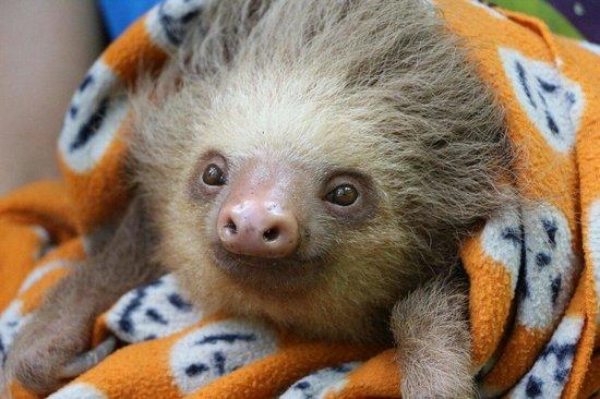 Fundación Jaguar Rescue Center: Faultier