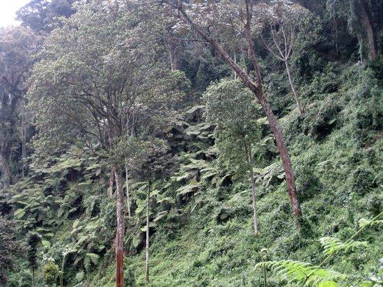 Nyungwe National Park : rainforest
