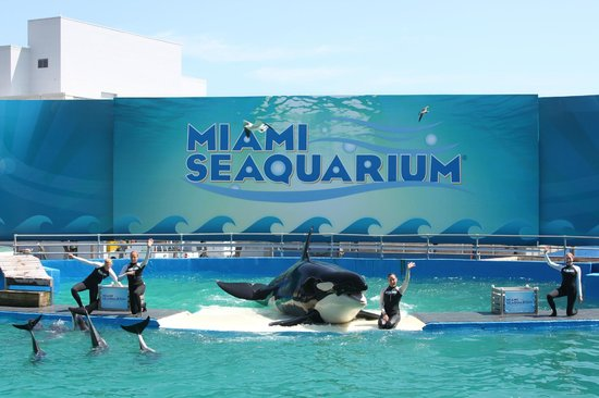 ... Whale Show! - Picture of Miami Seaquarium, Key Biscayne - TripAdvisor