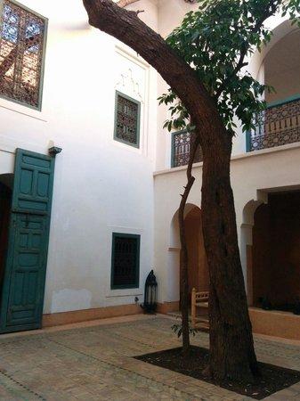 Dar Zitouna : Olive tree