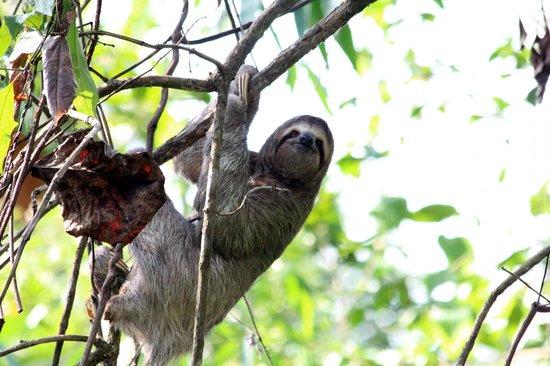 Hotel Mandarina : Mr. Sloth - poolside