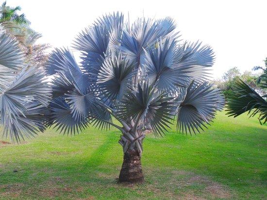 Habitation Clement : palmeraie