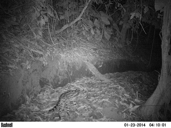 Saladero Eco Lodge: Camera trap photo