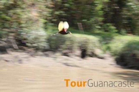 Tour Guanacaste : Palo Verde Riverboat Tour