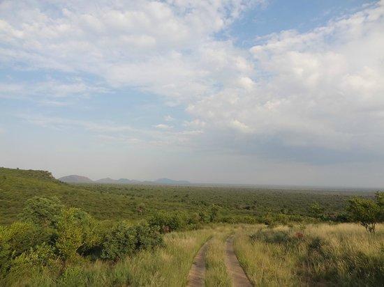 Sanctuary Makanyane Safari Lodge: Out on game drive