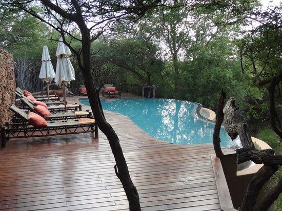 Sanctuary Makanyane Safari Lodge: The pool