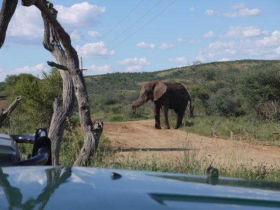 Sanctuary Makanyane Safari Lodge: Elephant outside the lodge