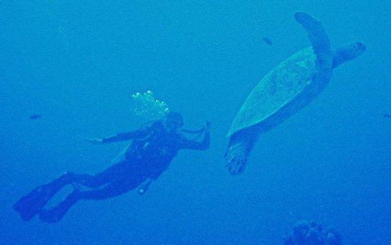 Kaimana Divers: Turtle Canyon June 2012