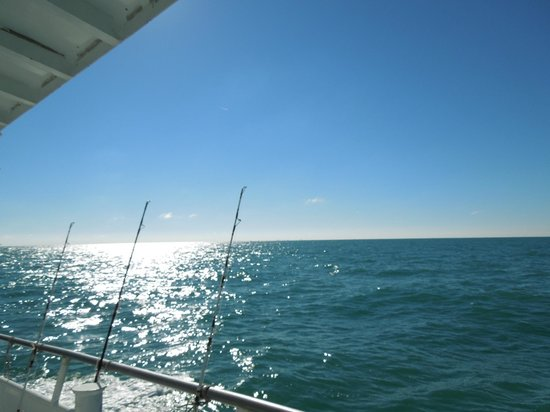 Gorgeous florida day picture of dolphin deep sea fishing for Dolphin deep sea fishing