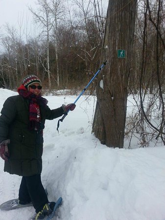 Peninsula State Park : Yay!  A trail for snowshoes only!  No cross-country allowed!