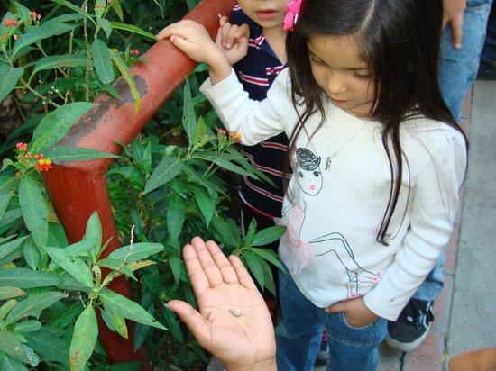 Parque Agua Azul: Monarch Caterpillar