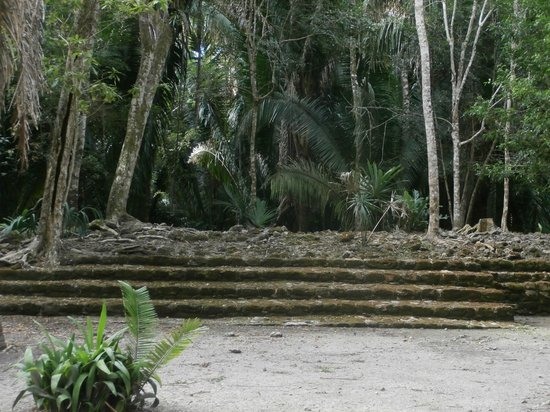 The Native Choice Tours: Under the jungle