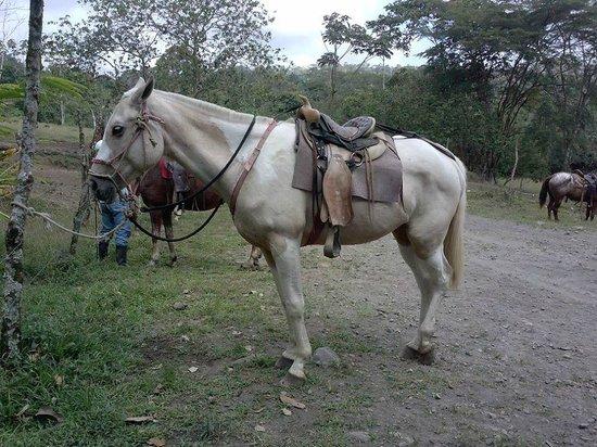 Cabalgata Don Tobias: Getting ready to ride