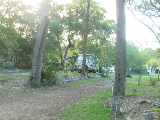 Minnie Water Holiday Park: Powered site in bush setting