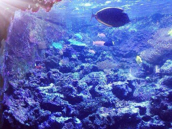 Atlantic City Aquarium Historic Gardner's Basin: Tropical fish