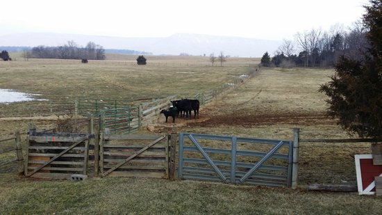 Piney Hill Bed & Breakfast : Some visitors