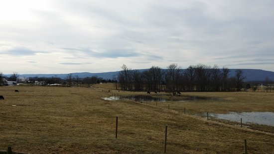 Piney Hill Bed & Breakfast: View from the back of the cottage