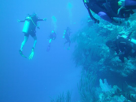 Oasis Divers: Along the reef wall
