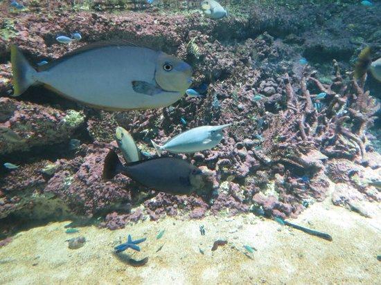 Sea Life Sydney Aquarium : One of the fish tanks