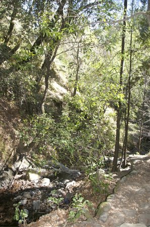 Uvas Canyon County Park : general view