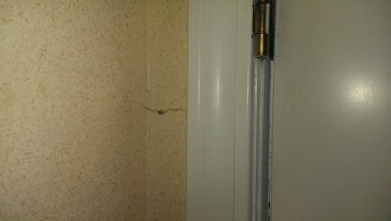 Baymont Inn & Suites Tuscaloosa : Cobwebs and Insects