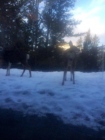 Hidden Ridge Resort: Deer outside the patio doors