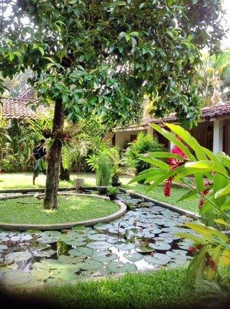 d'Omah Hotel Yogyakarta: Garden area.