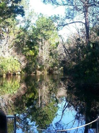 Ellie Schiller Homosassa Springs Wildlife State Park : View from boat