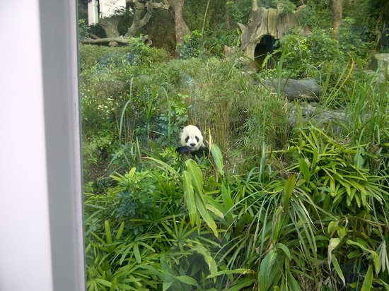 Taipei Zoo : Panda Exhibit - Outdoor Section