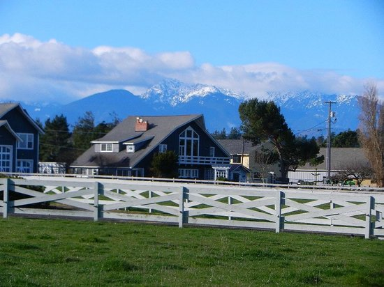 Dungeness Bay Cottages: Partial view from the kitchen of the Cascade Mountains