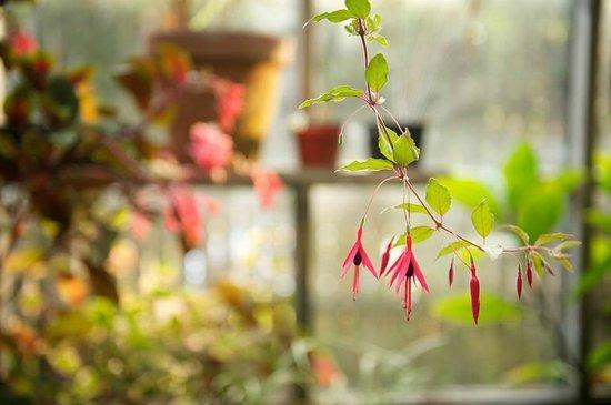 Glendeven Inn Mendocino: The greenhouse