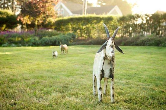Glendeven Inn Mendocino: Glendeven's lawn and gardens