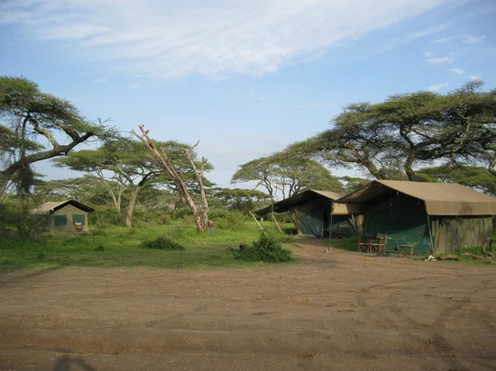 bett im zelt picture of serengeti halisi camp serengeti national park tripadvisor. Black Bedroom Furniture Sets. Home Design Ideas