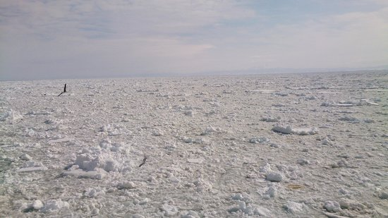 Abashiri Sightseeing Icebreaker Aurora : 流氷