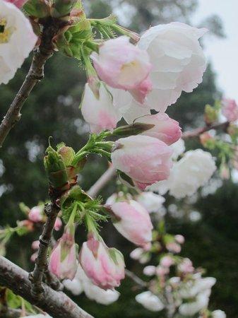 Cobbler's Walk Mendocino: Spring blooms at the Inn at Cobbler's Walk