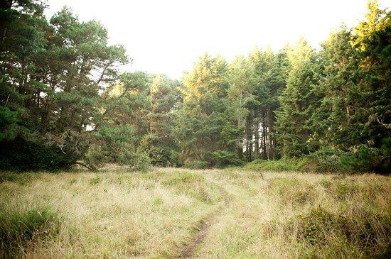 Cobbler's Walk Mendocino: The Cobbler's Walk to the headlands