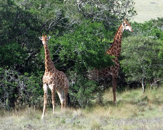 Addo Afrique Estate: What you can expect to see on your Schotia Safari with the 2 night package