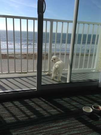 """Tides Folly Beach: Our dog Dallas on the landing, """"yes you can bring your dog"""""""